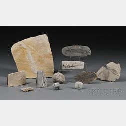 Large Assorted Collection of Fossils