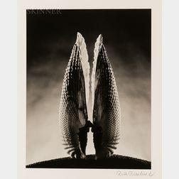Ruth Bernhard (American, 1905-2006)      Angelwing