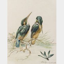 Louis Agassiz Fuertes (American, 1874-1927)  Kingfishers