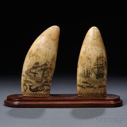 Pair of Scrimshaw Whale's Teeth