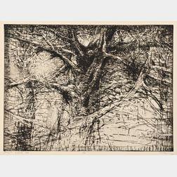 Michael Mazur (American, 1935-2009)      Tree, Norfolk