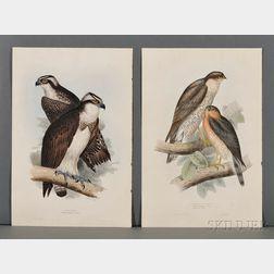 Ornithological Illustrations, Hayes, Gould, et alia.