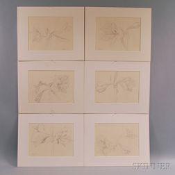 Fumio Yoshimara (Japanese, 1926-2002)      Six Floral Study Drawings: