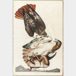 Audubon, John James (1785-1851) Red Tailed Hawk  , Plate 51.