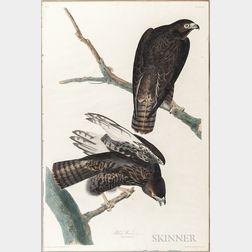 Audubon, John James (1785-1851) Black Warrior  , Plate 86.