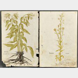 Varia: Three Botanicals; One Map; Twelve Text Leaves.