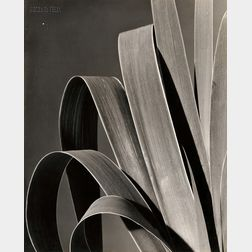 Rowena Fruth (American, 1896-1983)      Iris III