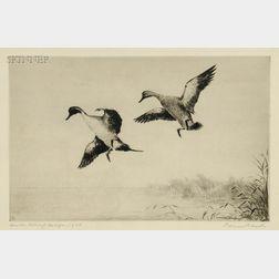 Roland Clark (American, 1874-1957)      Duck Stamp Design