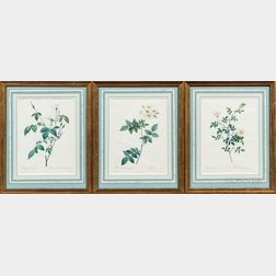 After Pierre-Joseph Redouté (French, 1759-1840)      Three Framed Botanical Prints of White Roses
