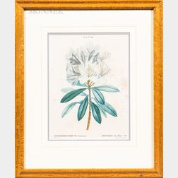 Three Framed 19th Century Botanical Prints:      Pierre Joseph Redouté (French, 1759-1840), Two Works: Rhododendrum Ponticue