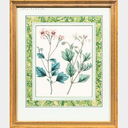 British School, 19th Century      Four Framed Botanical Prints of Geranium Species.