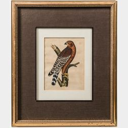 Pair of Framed Ornithological Lithographs