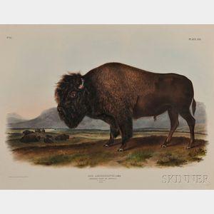 Sold for: $16,800 - Audubon, John James (1785-1851) American Bison, Male