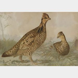 Alexander Pope Jr. (American, 1849-1924)  Lot of Three Bird Prints Including: Canvas-Back Duck