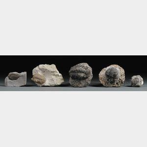 Five Trilobites