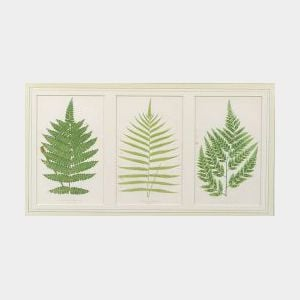 Six Framed Lithographs of Ferns