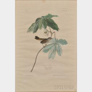 After John James Audubon (American, 1785-1851)      Swamp Sparrow, Male