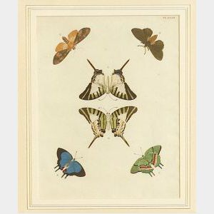Six Framed Hand Colored Engravings of Butterflies and Moths