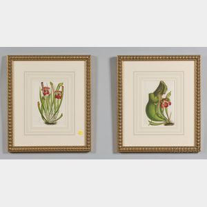 Six Framed Hand Colored Botanical Bookplates