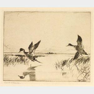Frank Weston Benson (American, 1862-1951)  Pair of Pintails