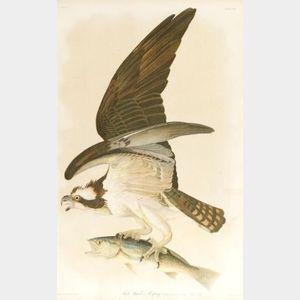Sold for: $160,000 - Audubon, John James (1785-1851)