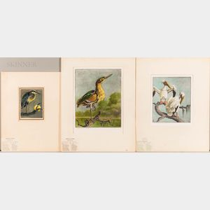 Benson Bond Moore (American, 1882-1974)      Three Bird Prints: Least Bittern ,  White Pelicans