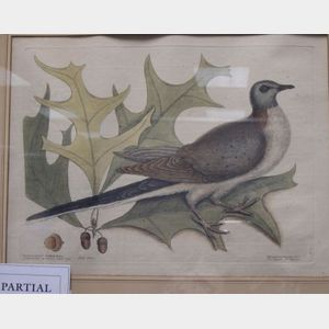 Two Framed Ornithological Prints