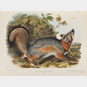 Sold for: $237,000 - Audubon, John James (1785-1851) and Reverend John Bachman (1790-1874)   The Viviparous Quadrupeds of North America.