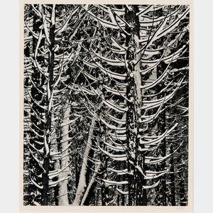 Ansel Adams (American, 1902-1984)      Forest Detail, Winter
