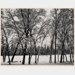 Ansel Adams (American, 1902-1984)      Young Oaks, Winter