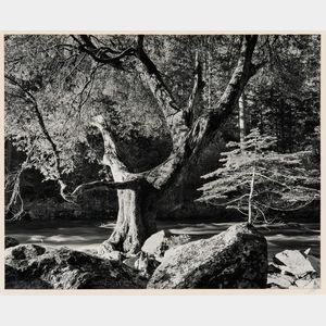Ansel Adams (American, 1902-1984)      Morning, Merced River Canyon