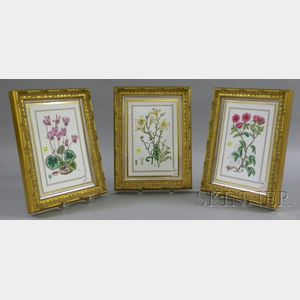 Set of Three Framed Royal Worcester Transfer Decorated Botanical Studies Porcelain   Plaques