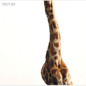 James Balog (American, b. 1952)      Giraffe Neck