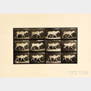 Eadweard Muybridge (British, 1830-1904)      Plate 696 (Trotting Eland), from Animal Locomotion