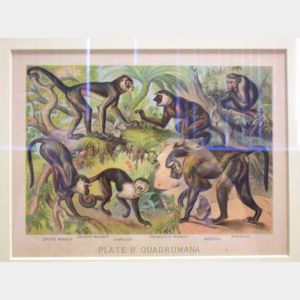 Two Matted and Framed Animal Prints