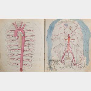 (Anatomy, 19th Century)