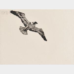 Frank Weston Benson (American, 1862-1951)      Soaring Fish Hawk