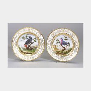 Two Paris Porcelain Ornithological Plates