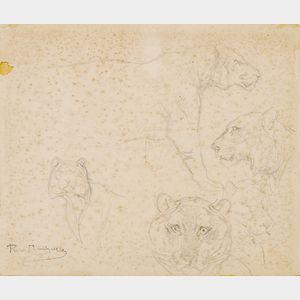 Rosa Bonheur (French, 1822-1899)      Lion Studies