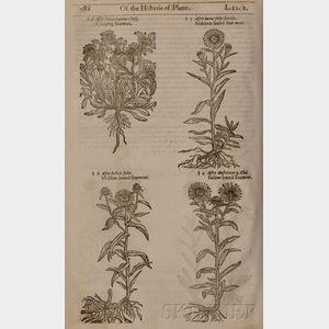 (Botanical Illustrations), Gerard, John (1545-1612)