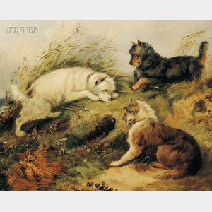 Attributed to Edward Armfield (British, 1817-1896)      Scottish Terriers