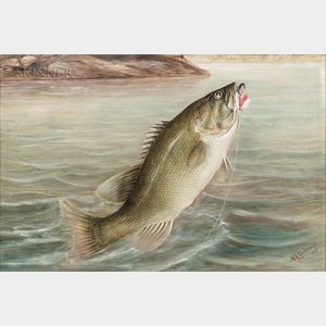 Harry A. Driscole (American, 1861-1923)      Bass Grabbing a Fly