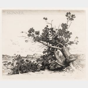 George Elbert Burr (American, 1859-1939)      Old Cedars - New Mexico