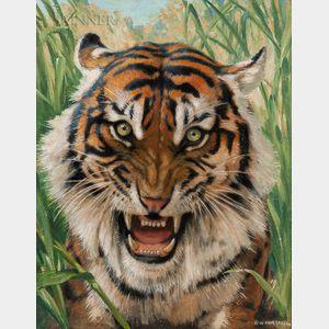 Robert Bruce Horsfall (American, 1869-1948)      Tiger Head