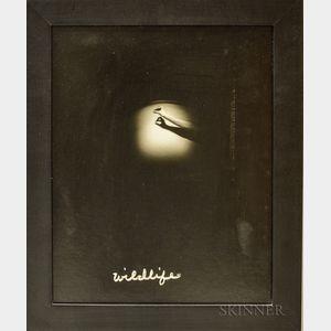 Barbara Ess (American, b. 1948)      Wildlife