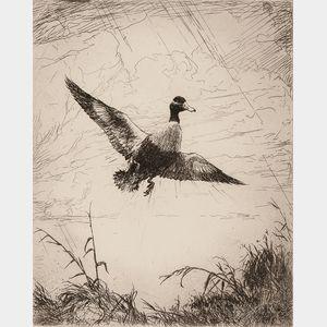 Frank Weston Benson (American, 1862-1951)      Shoveler Drake