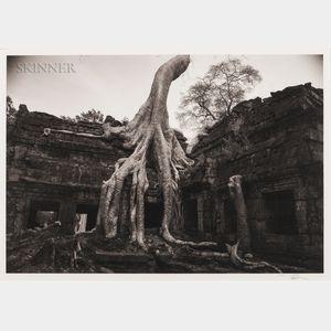 Kenro Izu (Japanese, b. 1949)      Angkor 26, Ta Prohm, Cambodia