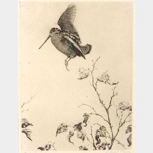 Aiden Lassell Ripley (American, 1896-1969)  Early Woodcock