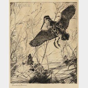 Frank Weston Benson (American, 1862-1951)      Woodcock