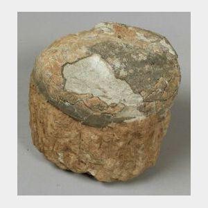 Fossilize Sauropod Egg